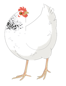 Huhn_Logo_transparent